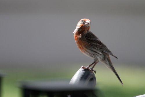 khare-blog-bird5