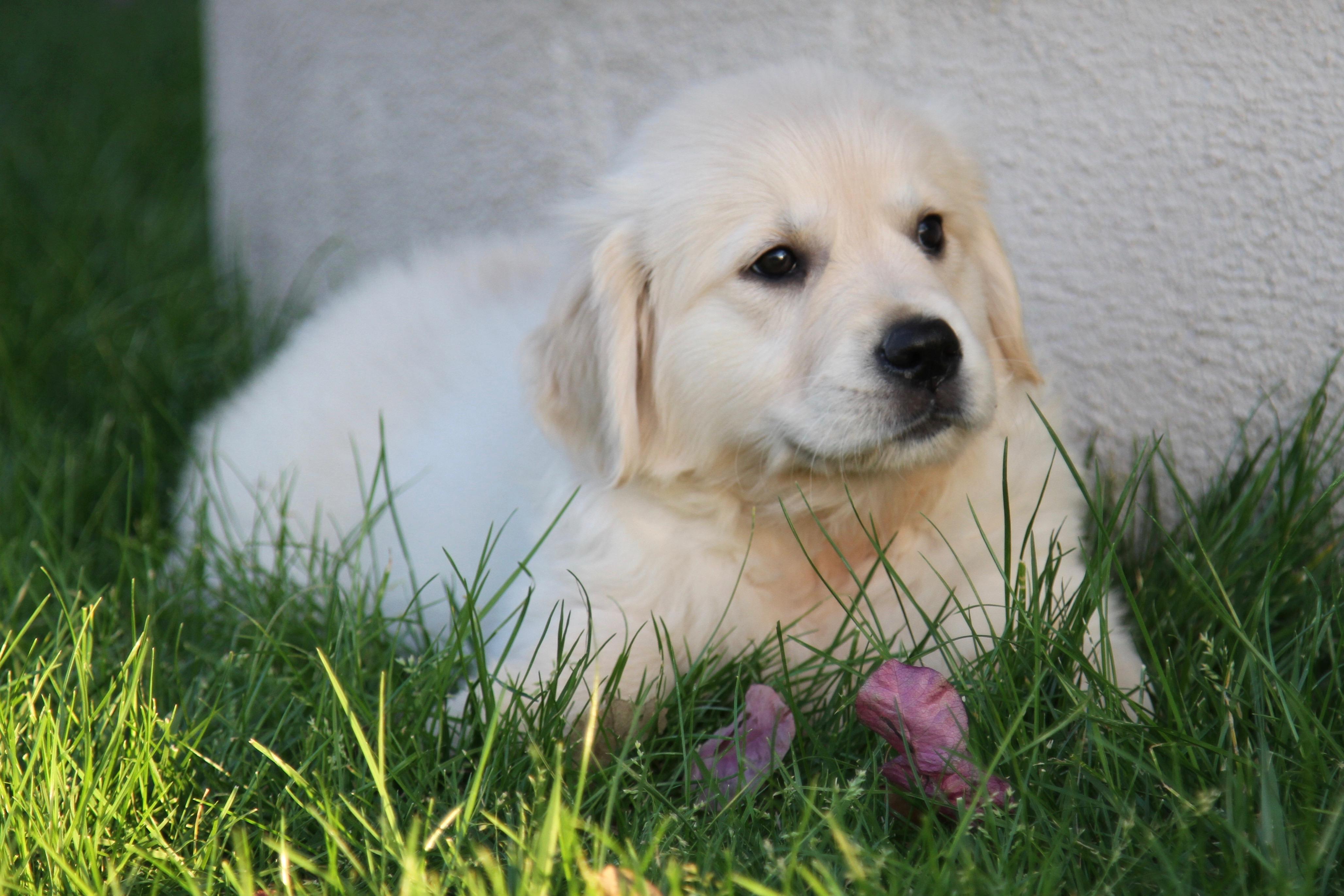 Puppy002 - 1