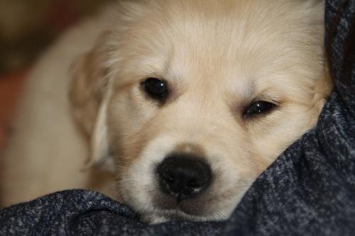 Puppy003 - 1