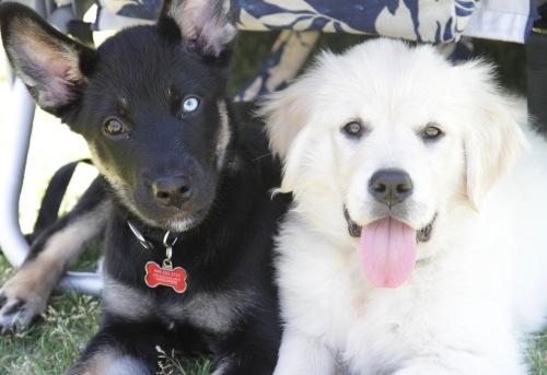 Puppy10 - 1