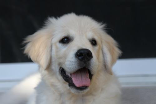 Puppy12 - 1