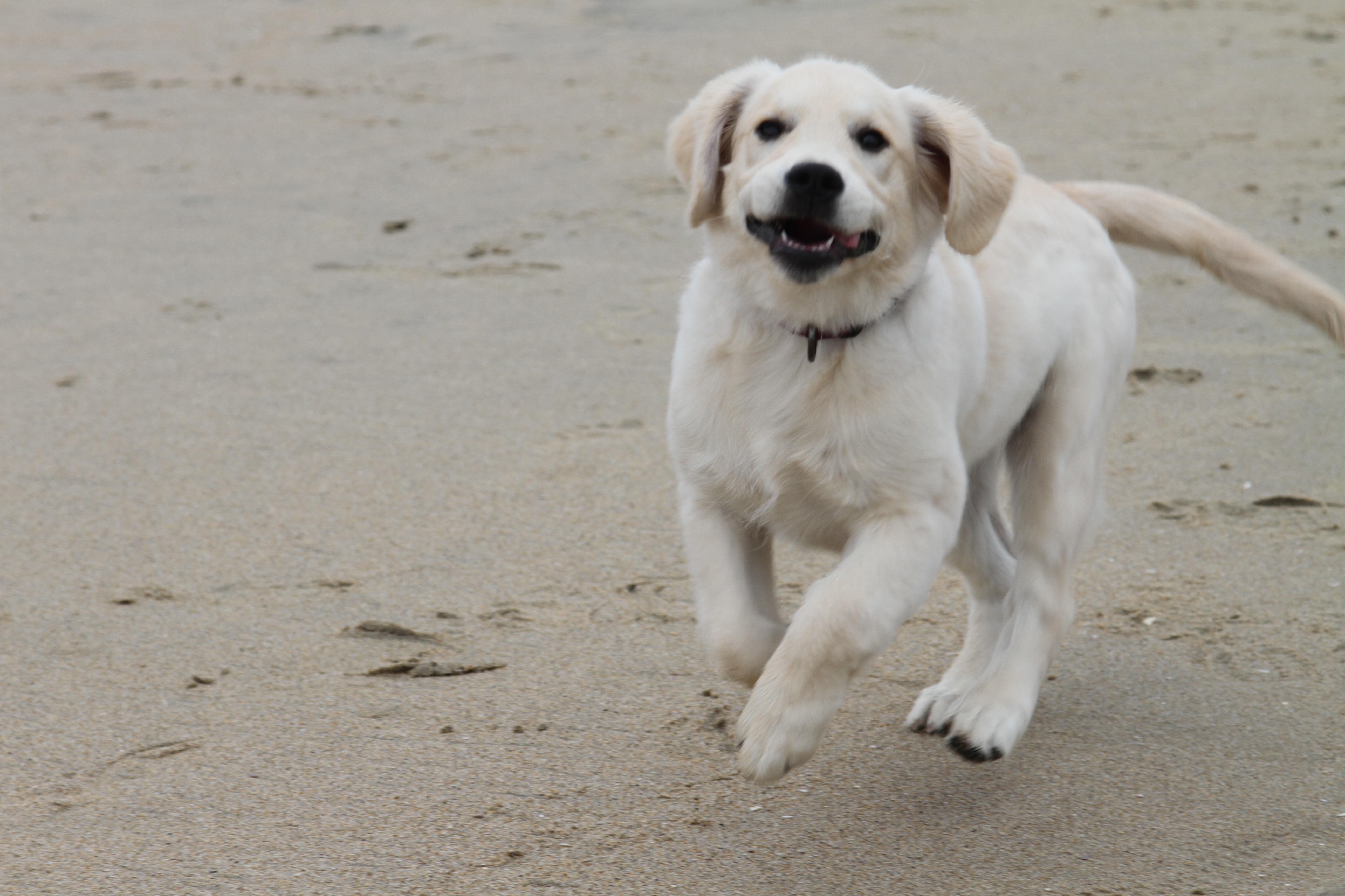 Puppy16 - 1